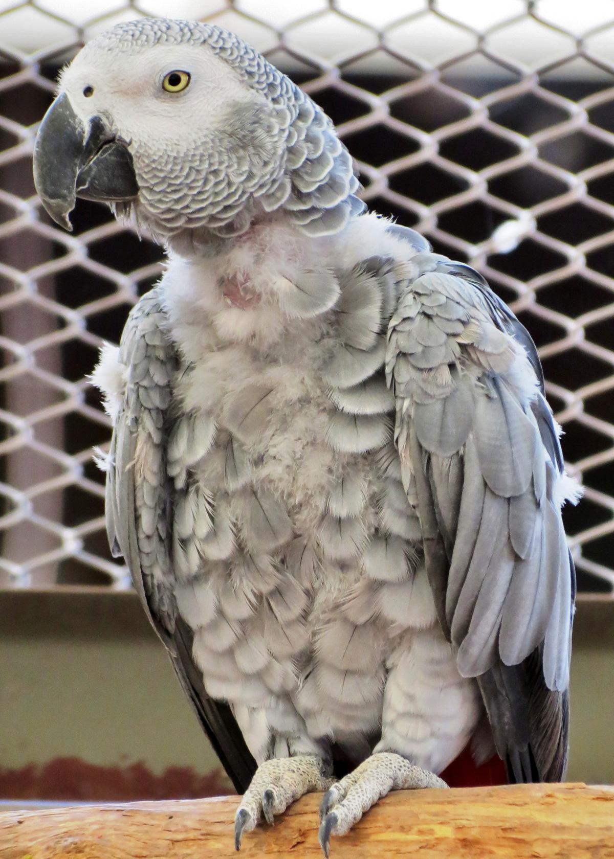 mitzu bird