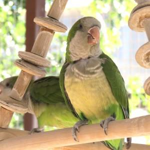 Verde Birdie