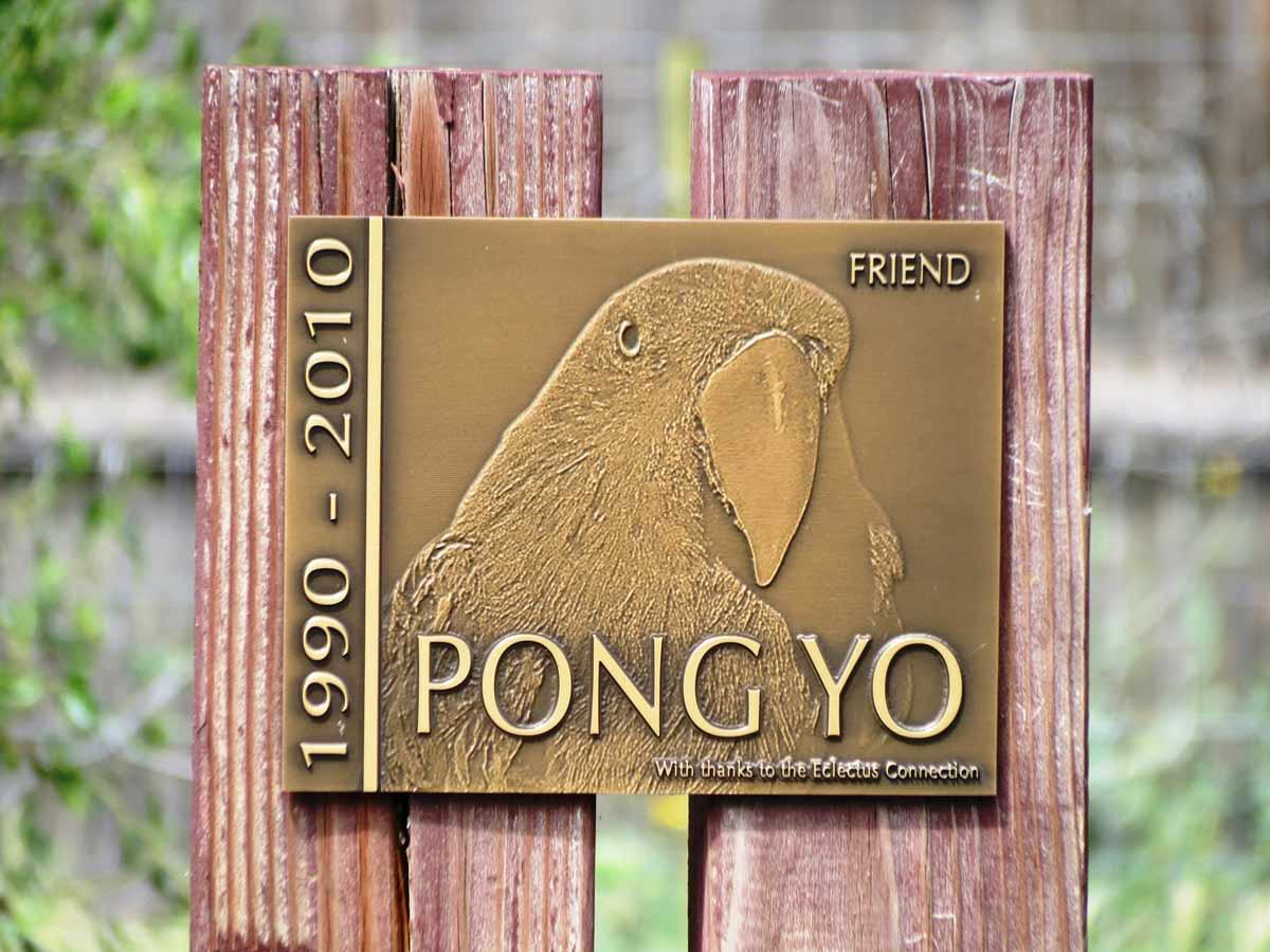 Pong-garden-3