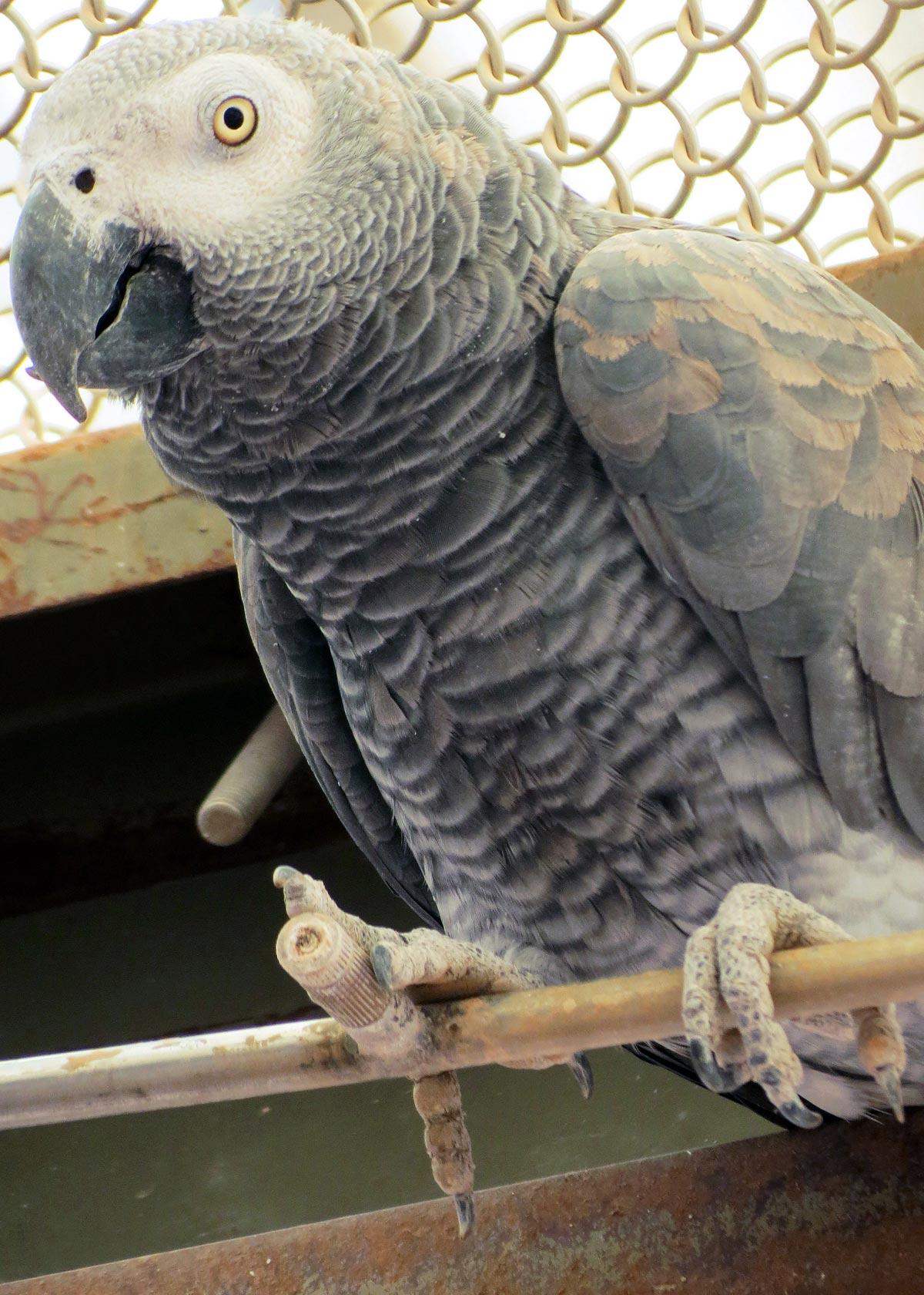 Poppa Grey