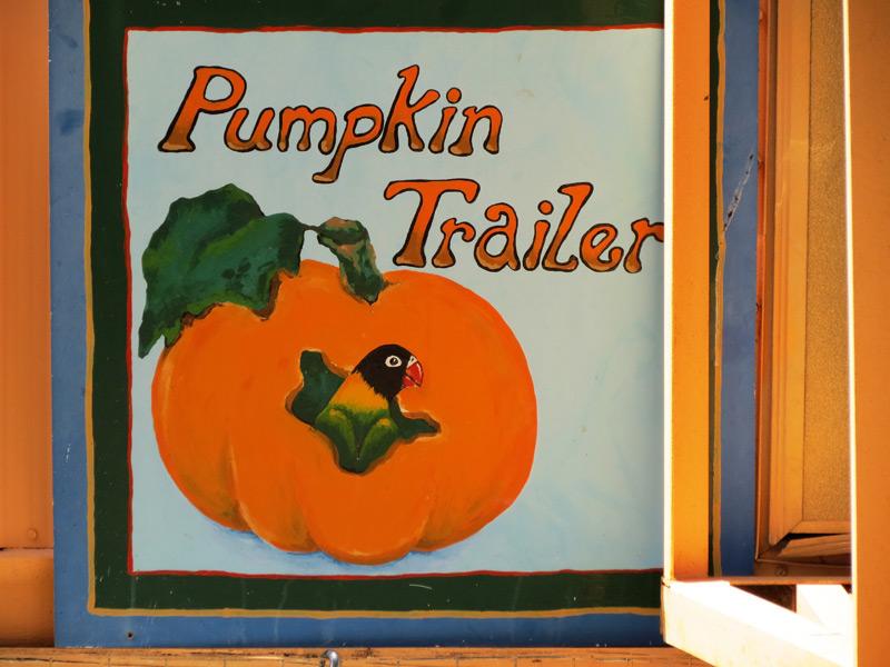 Pumpkin3-2015