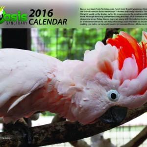 2016 Oasis Birds Calendar
