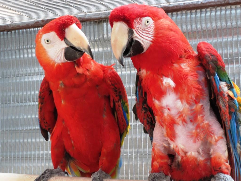 Redbird & Rubio