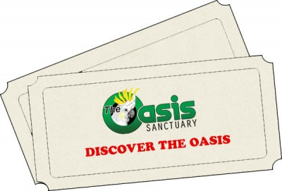 Discover The Oasis