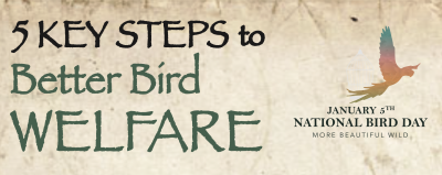 5 Key Steps To Better Bird Welfare