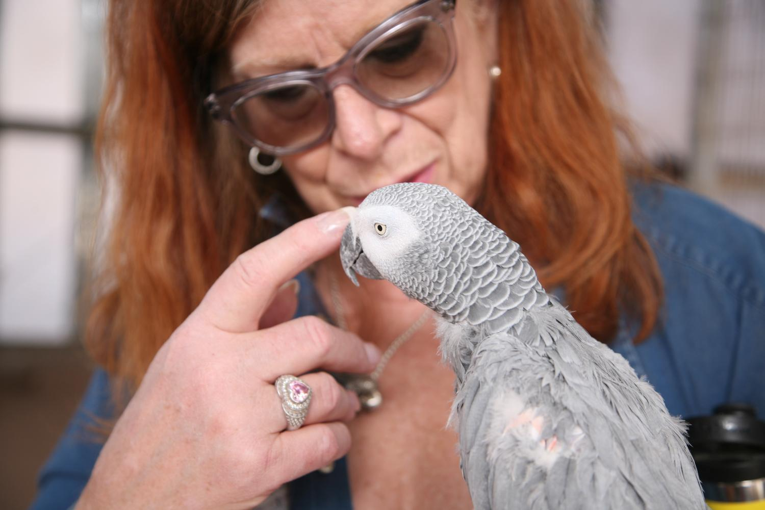 Untold Arizona: A Paradise For Parrots In Need Of A Home