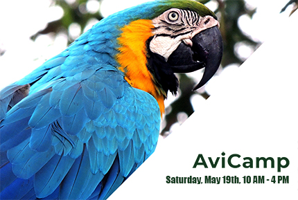 AviCamp: Come Out For An Activity Filled Day!