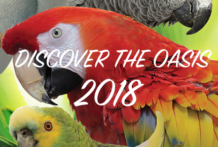 Discover The Oasis 2018