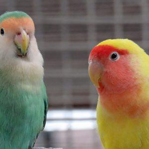 Lulo & Blondie