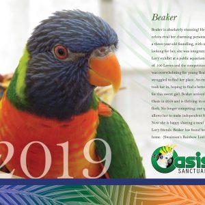 2019 Oasis Birds Calendar