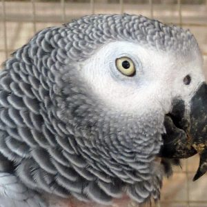 African Grey Aviary - The Oasis Sanctuary