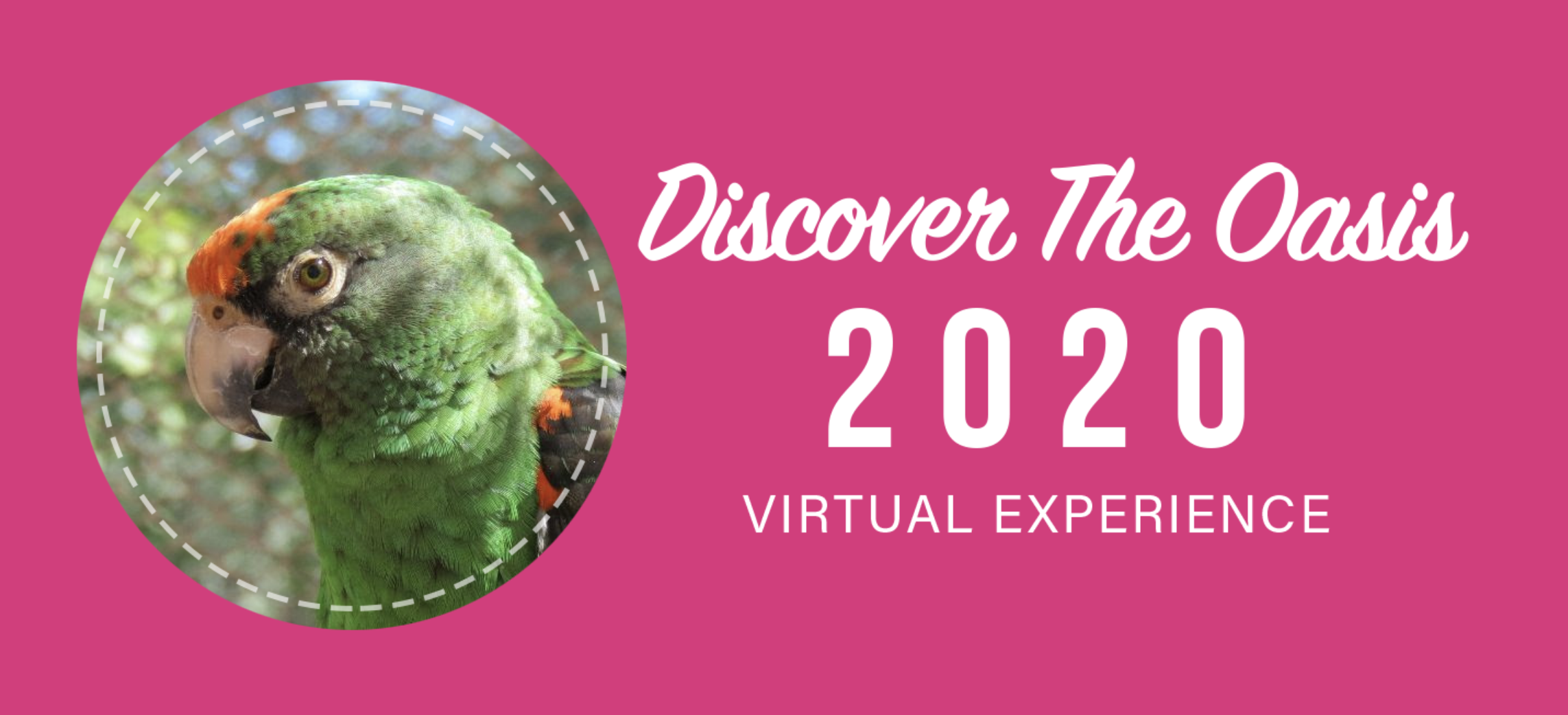 Discover The Oasis 2020 Virtual Experience