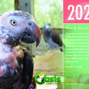 2021 Oasis Birds Calendar