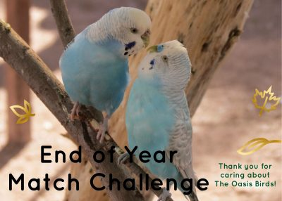 End Of Year Match Challenge