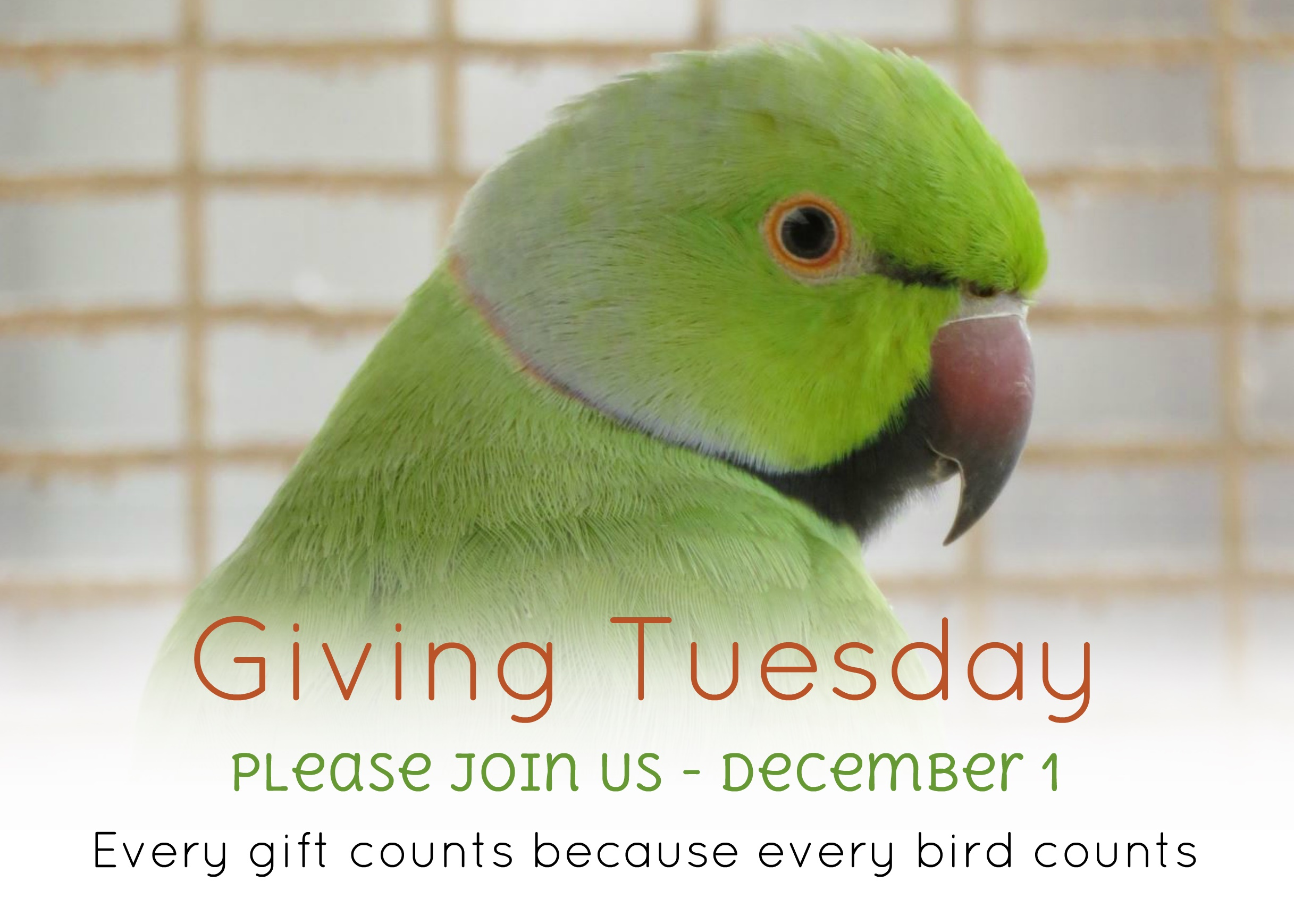 Join Us For #GivingTuesday – Dec 1